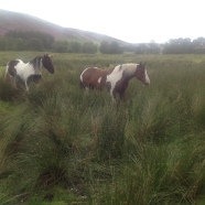 Horses in our land