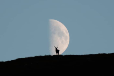 Deer and the moon